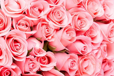 couleurs-de-rose-rose-Suti-Stock-Photo.w