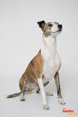 Dog photography in Stoke On Trent