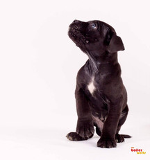 Stoke On Trent pet photography services