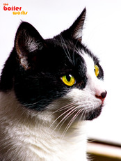 Cat photography in Stoke