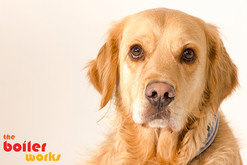 Dog photos in Stoke On Trent