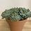 Thumbnail: Vetplant