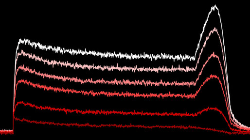 Kv11.1-- a critical channel for repolarizing ventricular cardiomyocytes