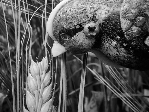 Barleybird 4 Observations of Natural Forms
