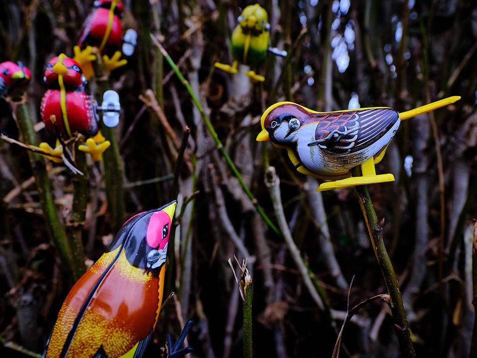 Bird Network 2