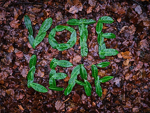 Vote Leaf