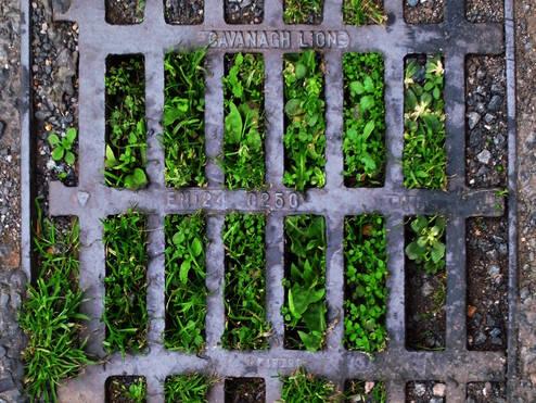 Subterranean Growth