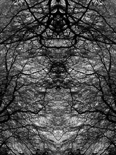 Hidden from View 3