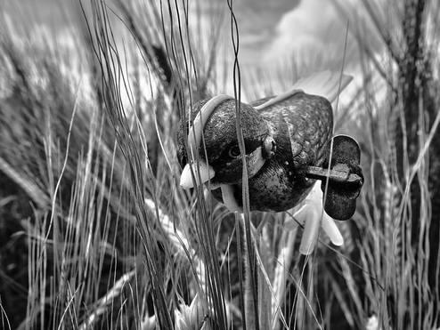 Barleybird 3
