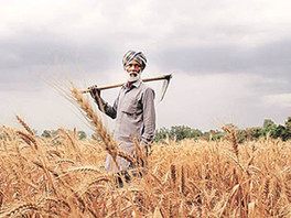 "Is Indian farmers' debt the real cause of the ""recent surge"" in farmer suicides over the years?"
