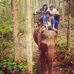 #elephanttrek #laos