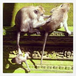 Hang on little monkey