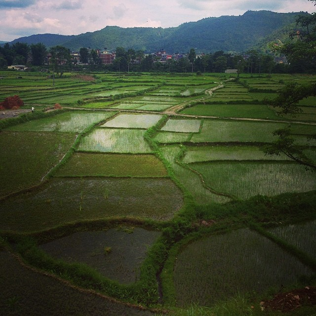 Majestic rice paddies..