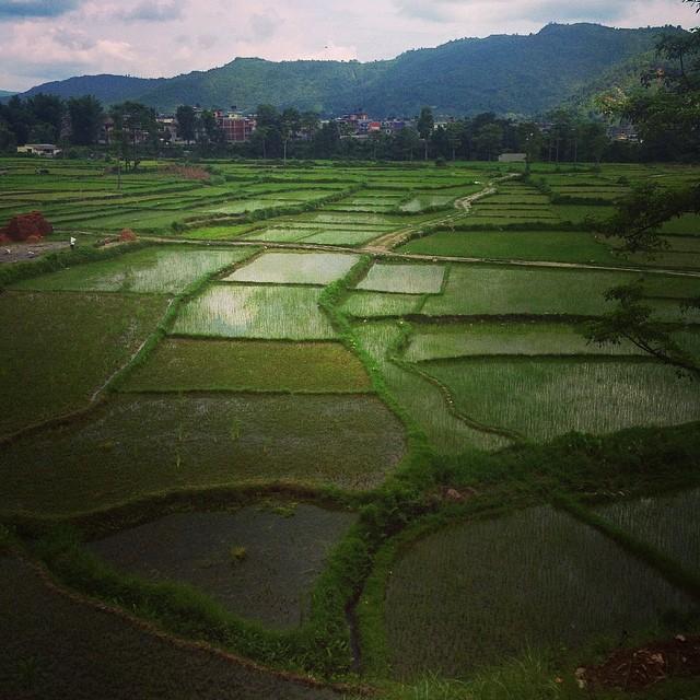 Majestic rice paddies..