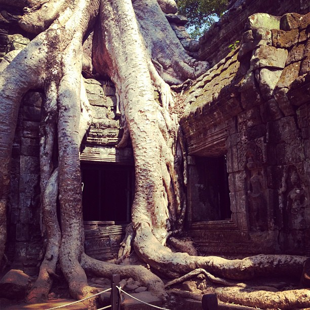 Nature is so powerful! #cambodia