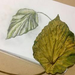 Leaf Study