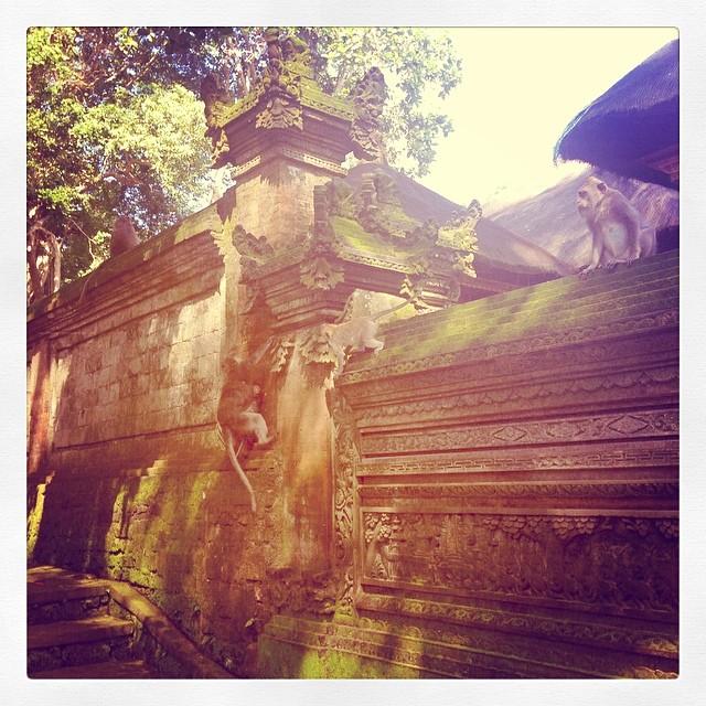 I never tire of monkeys! #bali #indonesia
