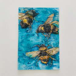 Water Bees