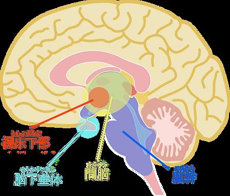 脳2.png