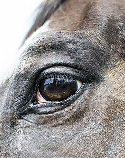 horse-2446728_1920.jpg