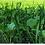 Thumbnail: Domain Outdoor Green Machine