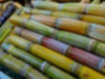 sugar-cane-276242_1920.jpg