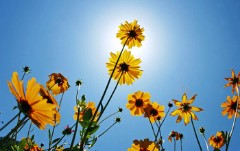 Wildflowers Wallpapers 2.jpg