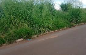 Prefeitura começa a notificar proprietários de imóveis com mato alto e lixo