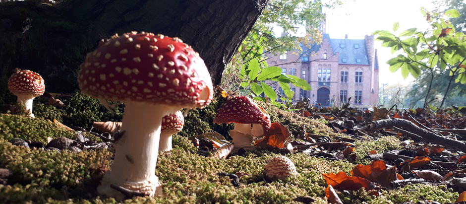 #43: funky mushrooms and a new living room