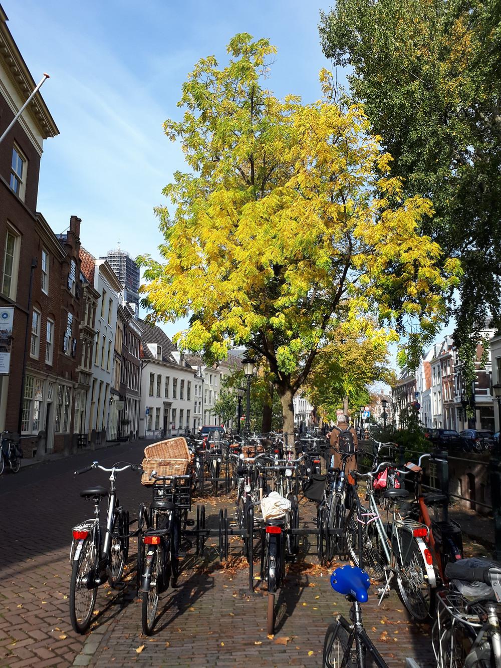Grachtenpanden in Utrecht