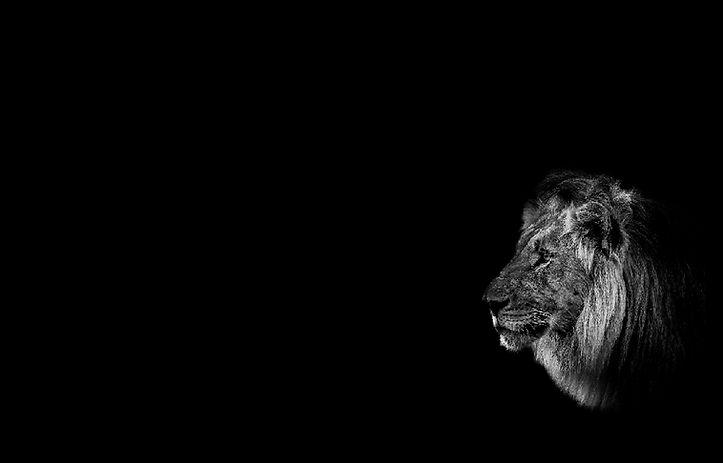 MY HUNTING  DAY lion 2.jpg