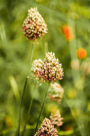 flowers-4744244_1920.jpg