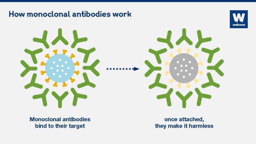 Monoclonal Antibody Treatment Washington