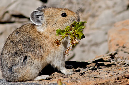 Forest Friends Storytime: Rocks and Pikas