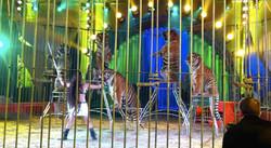 Circo Massimo Show 5.jpg