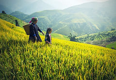 agriculture-1822446_1920.jpg