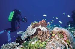 amanta-plongee-lagon-maore-550x358