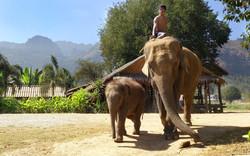 elephants-2061074_1920