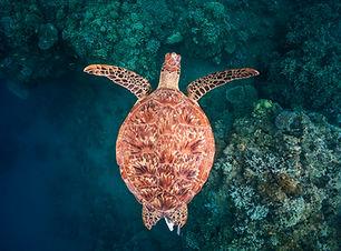 2017 11 BARATHIEU Mayotte 5693.jpg
