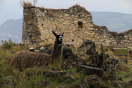 232 - Kuelap, Chachapoyas, Peru.JPG