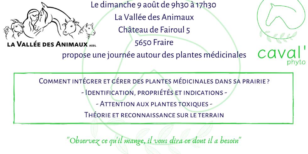 Identifier et gérer les plantes médicinales dans sa prairie - Fraire