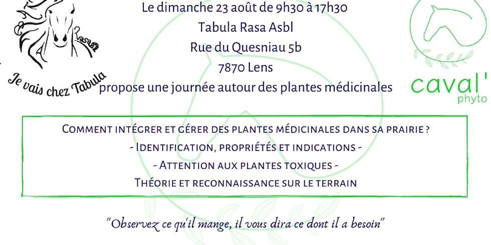 Identifier et gérer les plantes médicinales dans sa prairie - Lens