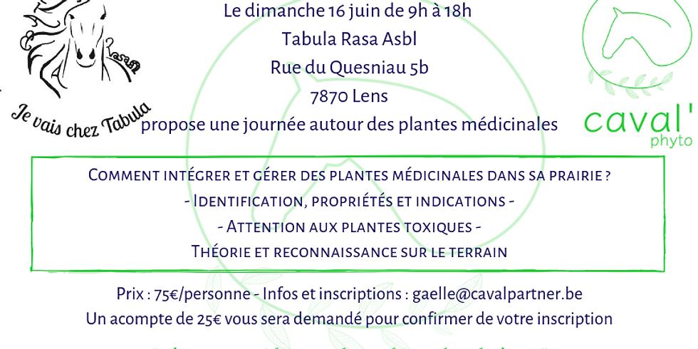 Identifier et gérer les plantes médicinales dans sa prairie