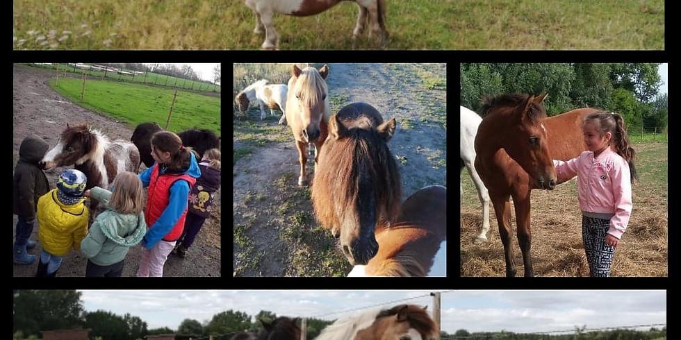 Les mercredis poney !