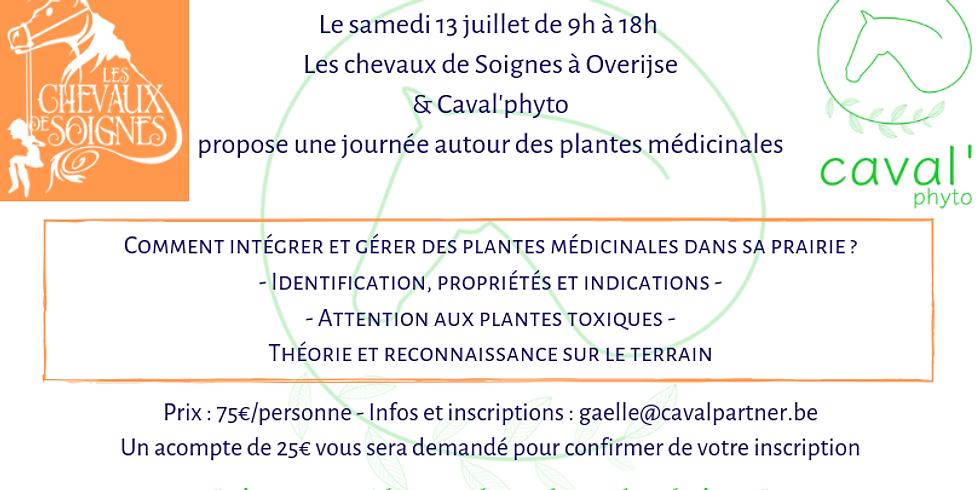 Identifier et gérer les plantes médicinales dans sa prairie - Overijse