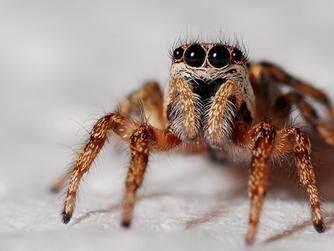 Episode 4: Spiders