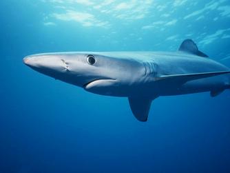 Episode 1: Sharks