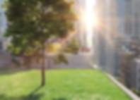 Green Roof_DEC_2.jpg