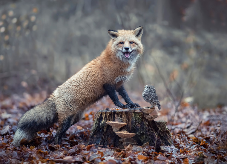 Fuchs2.jpg