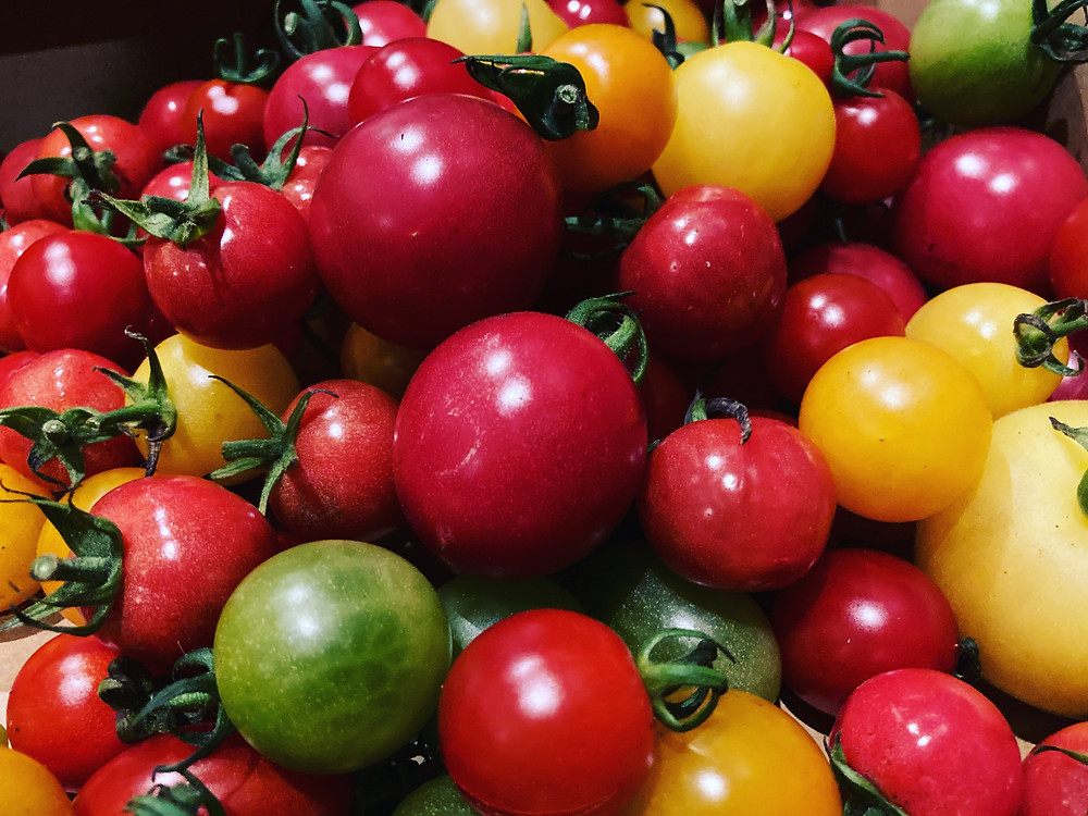 丹生川、中家農園さんのミニトマト。 宝石箱✨ 明日のランチでお出しします😊  明日のランチ、ご予約で満席です🙇♂️ いつもありがとうございます🙇♂️  14時以降は空いてます! お待ちしております。